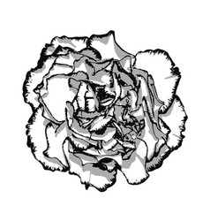 clove flower with edging black and white vector image