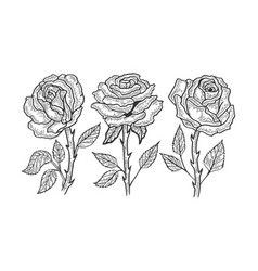 Rose flower sketch engraving vector