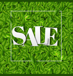 sale poster with green leaves background vector image