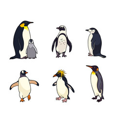 Set of different penguins vector