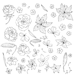 Set of flowers and leaves vector