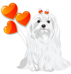 Valentine card with dog Maltese and hearts vector