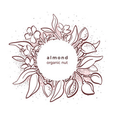 Almond nut template in circle organic food vector