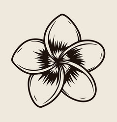 Beautiful plumeria flower template vector