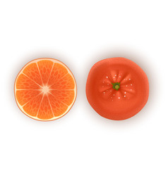 bright set colorful half slice and segment vector image
