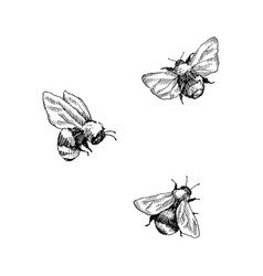 bumblebee set hand drawn vector image
