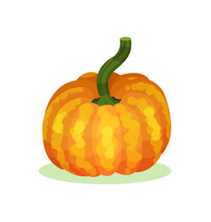 Flat icon of large orange-yellow pumpkin vector