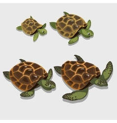 Group of turtles in a cartoon style closeup vector image