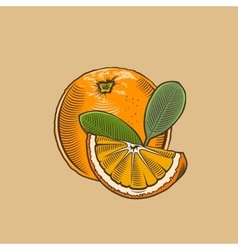 Orange in vintage style Colored vector