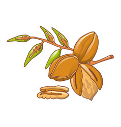 pecan leaves icon cartoon style vector image