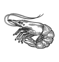 Shrimp sea animal engraving vector