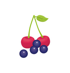 Cherries and grapes delicious fruits vector