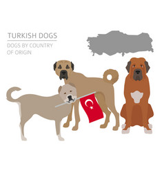 Dogs by country of origin turkish dog breeds vector
