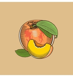 Peach in vintage style Colored vector
