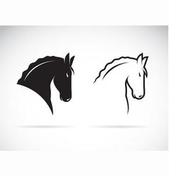 horse head design on white background wild vector image