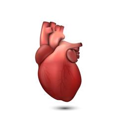 3d realistic health heart model icon vector
