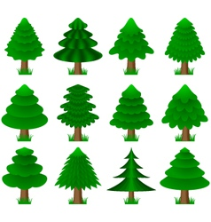 Conifers coniferous trees vector
