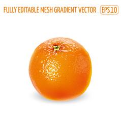 Fresh unpeeled orange on a white background vector