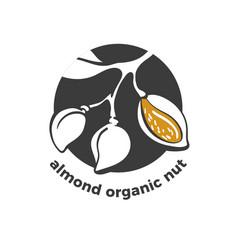 almond symbol branch nut graphic vector image