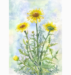Bouquet of yellow wild chamomiles watercolor vector