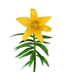 Colorful yellow naturalistic lily flower on green vector