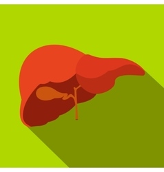Human liver flat icon with shadow vector