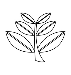 leaves plant isolated icon design vector image