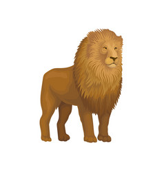 lion wild african animal on a vector image
