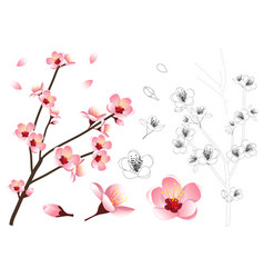 momo peach flower outline vector image