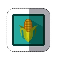 Sticker colorful square with corn vector