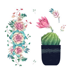 succulents cacti hand drawn on a white background vector image
