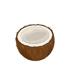 Coconut Fruits Isolated on White Background vector image vector image