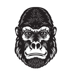 Gorilla ape head on white background design vector