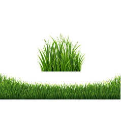 Green grass frames set in isolated white vector