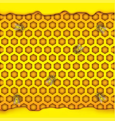 Honeycombs in the shape of hexagon puddle of vector
