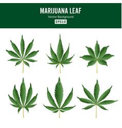 Marijuana green leaf medicinal herbs vector
