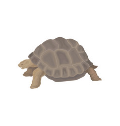 Turtle wild african animal on vector