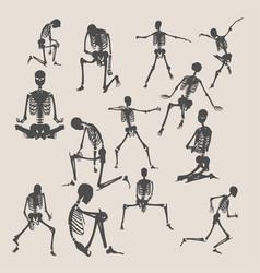 halloween human skeletons set vector image
