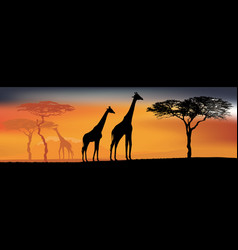 desert view with giraffes background with african vector image