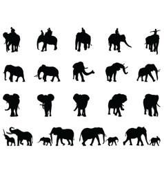 Silhouettes elephants vector