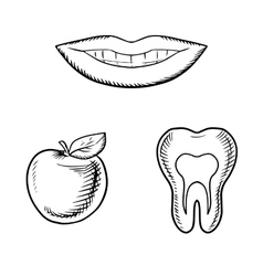 Smile apple fruit and healthy tooth vector