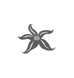 starfish icon isolated on background modern flat vector image
