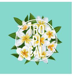 tropical floral summer design plumeria flowers vector image