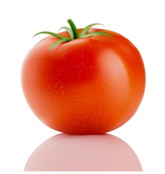 red truss tomato vector image vector image