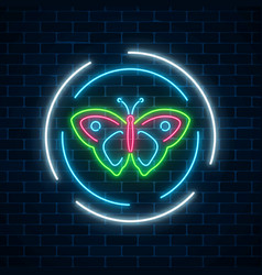 Colorful batterfly glowing neon sign in round vector