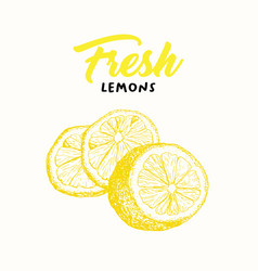 fresh lemon color vector image