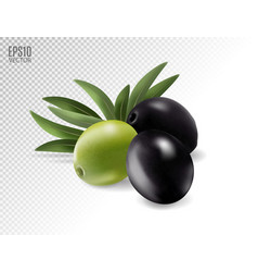 Green and black olives on transparent photo vector