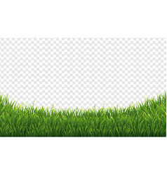 Green green grass isolated transparent background vector