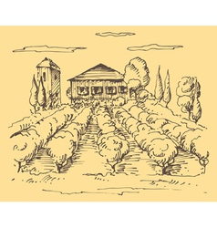 Hand drawn vineyard vector image