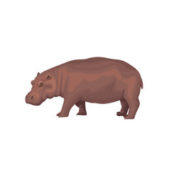 Hippo wild african animal side view vector